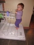 Abby! Out of my dishwasher!